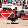 2017-02-22-ALVARO-TORO_DE_ONCE/019