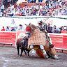 2017-02-28-alvaro-corrida_formal/035