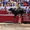 2017-09-16_Toro_de_Once/049