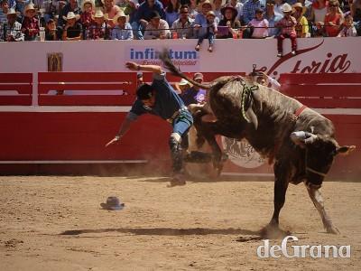 El toro de los Pelayo